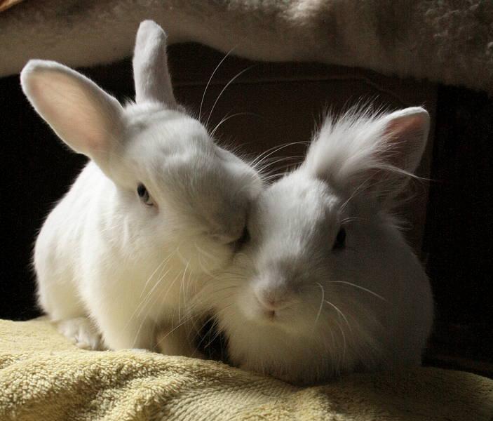rabbit-love_12