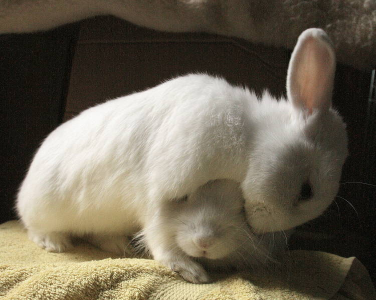 rabbit-love_13