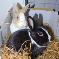 Flora und Loki 1