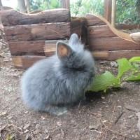 5-15 Weilandt-Kaninchen 2