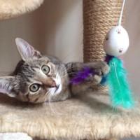 7-12 Kitten-Elsa 2