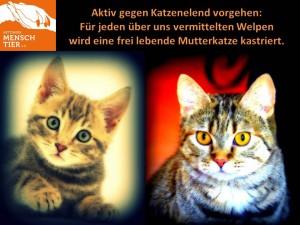 Aktiv gegen Katzenelend x