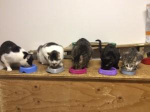 Fuenf Katzen