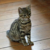 8-15 Agosi-Katze