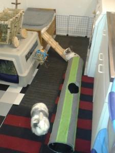 Kaninchen-Zimmergehege Auletta 1